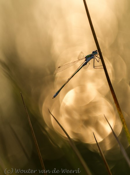 2013-08-21 - Caught in the light<br/>Leersumse veld - Leersum - Nederland<br/>Canon EOS 7D - 100 mm - f/3.5, 1/800 sec, ISO 200